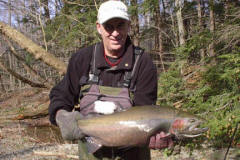 A nice Elk Creek Pennysylvania Steelhead caught while fly fishing on a November guided trip